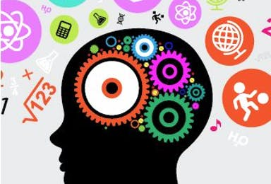 Neuroplasticity and Development